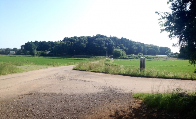 小幡城全景。