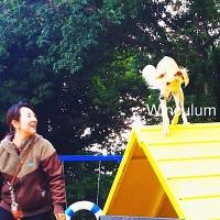 ワンちゃんとニャンコの家庭教師Winculum(うぃんくるむ)