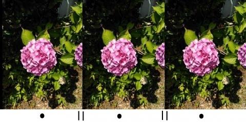 アジサイ3Dの立体イメージ