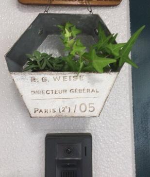 家のグリーン