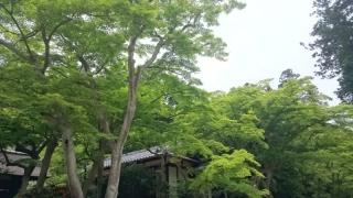 新緑の鎌倉06