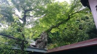 新緑の鎌倉08
