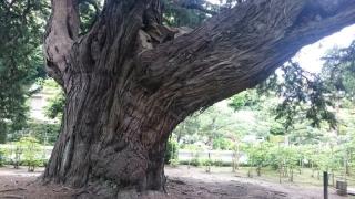 新緑の鎌倉17