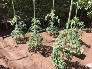 家庭菜園_003