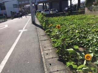 黒いひまわり_05