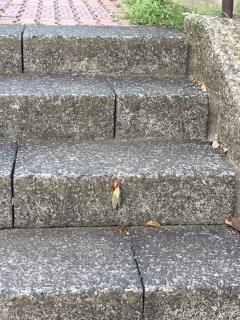 蝉の脱皮_01