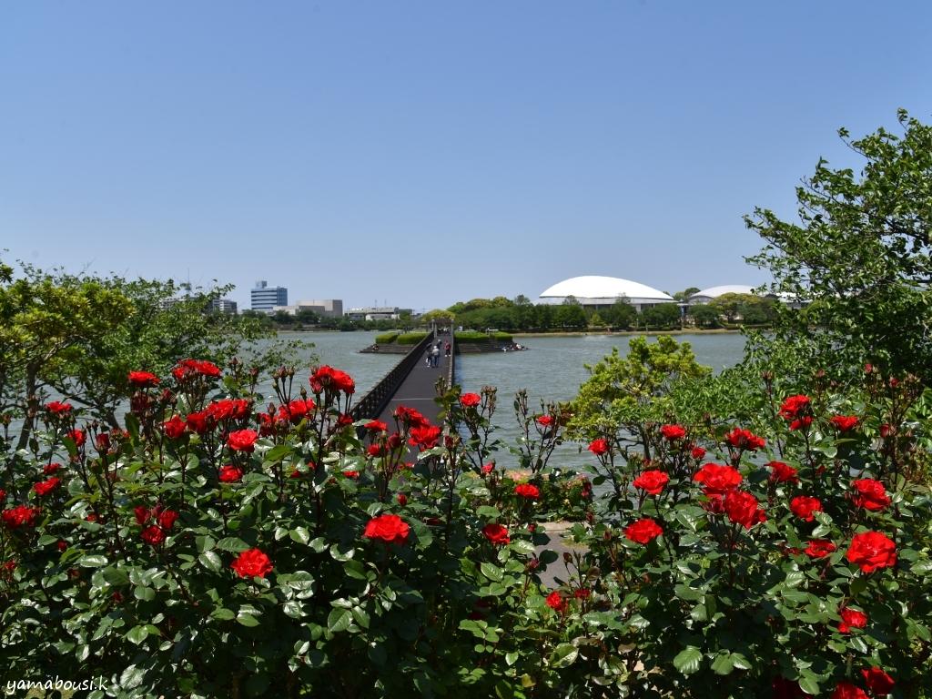 駕与丁公園 バラとかすやドーム