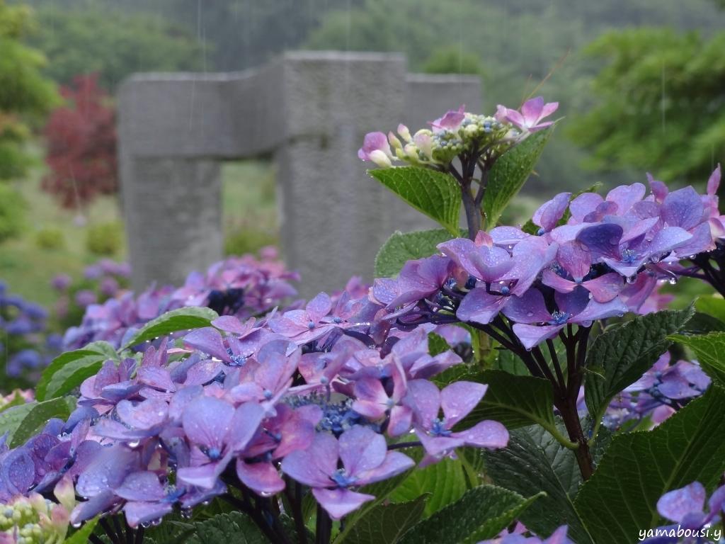 雨の日の紫陽花DSC00820