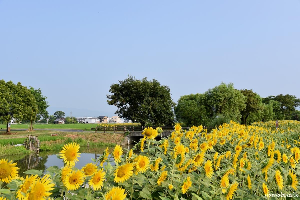 ひょうたん島公園 DSC_0958
