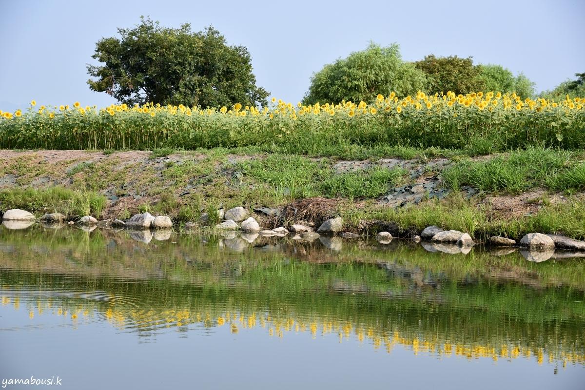 ひょうたん島公園 DSC_0986