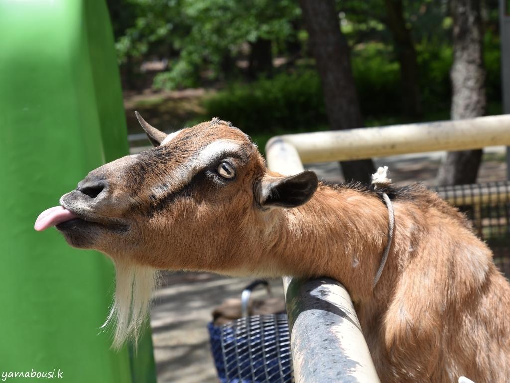 うみなか動物園 動物の森 DSC_6901