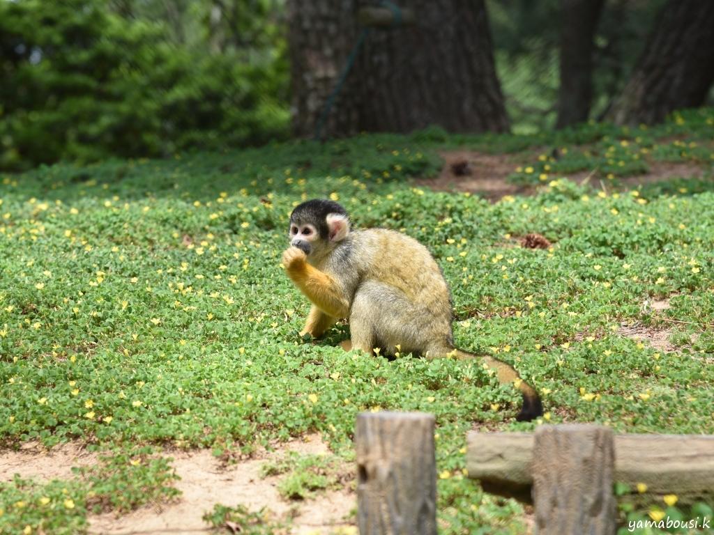 うみなか動物園 動物の森 DSC_7136