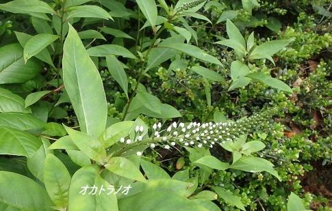6月ゆうゆう山歩クラブ例会 043-001