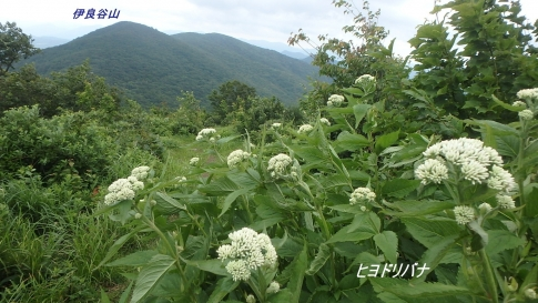 6月ゆうゆう山歩クラブ例会 044-001