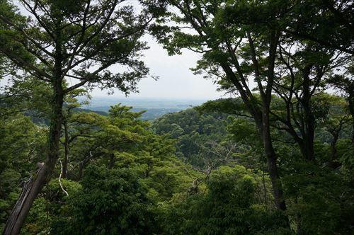 6神社周辺の森