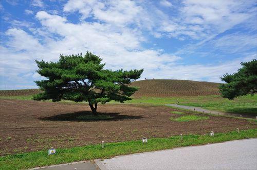 2ネモフィラの丘