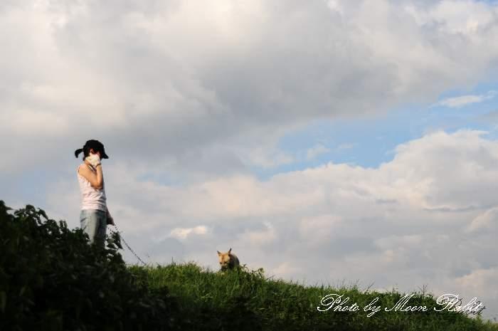 夏・犬の散歩 加茂川堤防 愛媛県西条市緑町