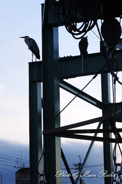 西条市北浜南の青鷺 西条漁港