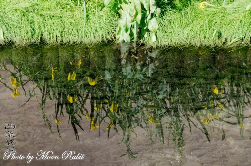 新町泉に映る草木