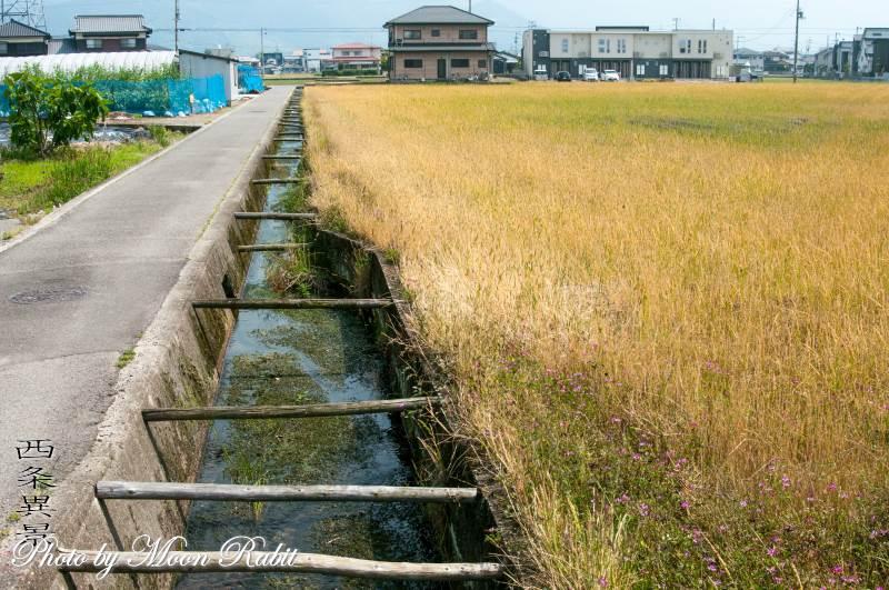 水路 愛媛県西条市横黒下
