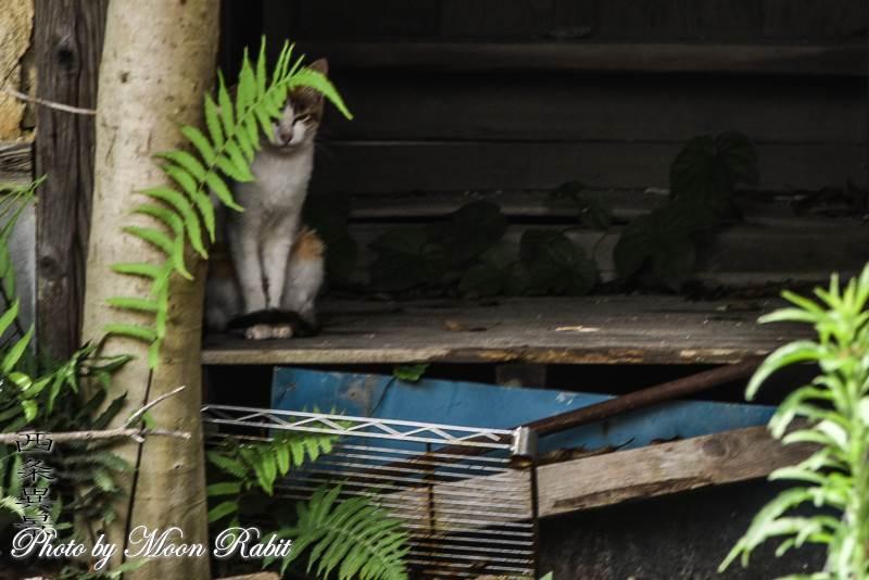 廃屋の野良猫 愛媛県西条市神拝