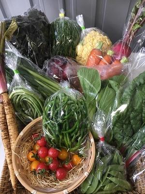 ①2018 6 野菜セット