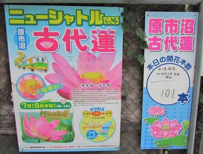 haraichinuma180701-106.jpg