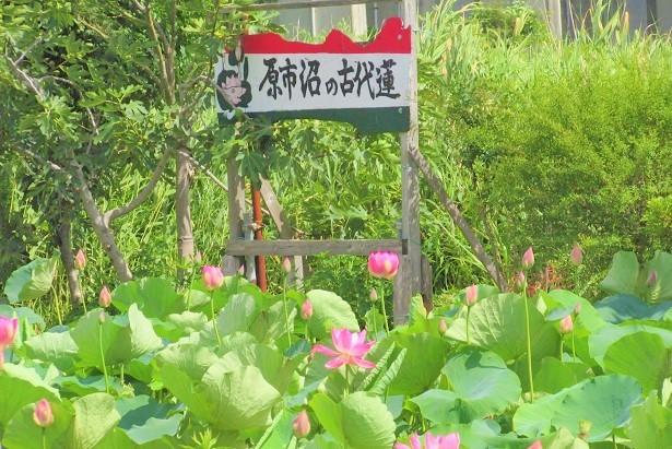 haraichinuma180701-113.jpg