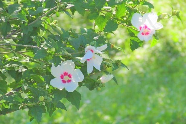 sakurasou180630-112.jpg