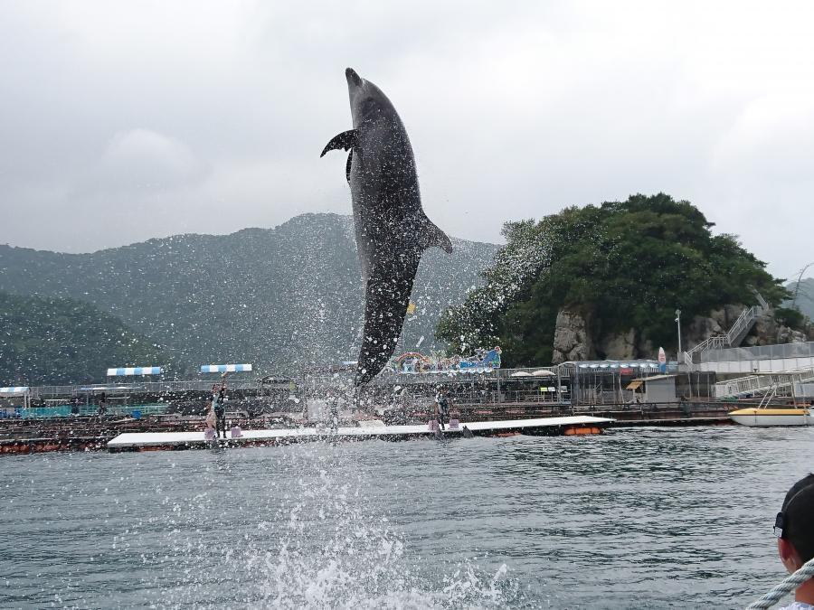 北九州発!姪甥との旅シリーズ「イルカと泳ぐ夏休み2017」