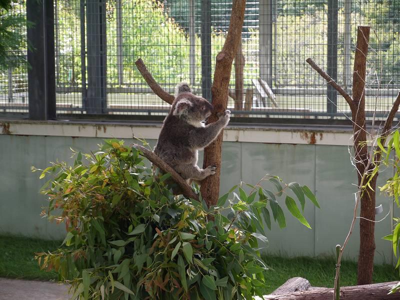 コアラと会える!「平川動物公園(鹿児島県鹿児島市)」