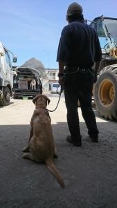 ゼロ 災害救助犬