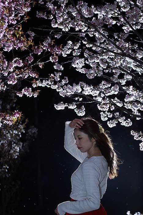 智美:夜桜