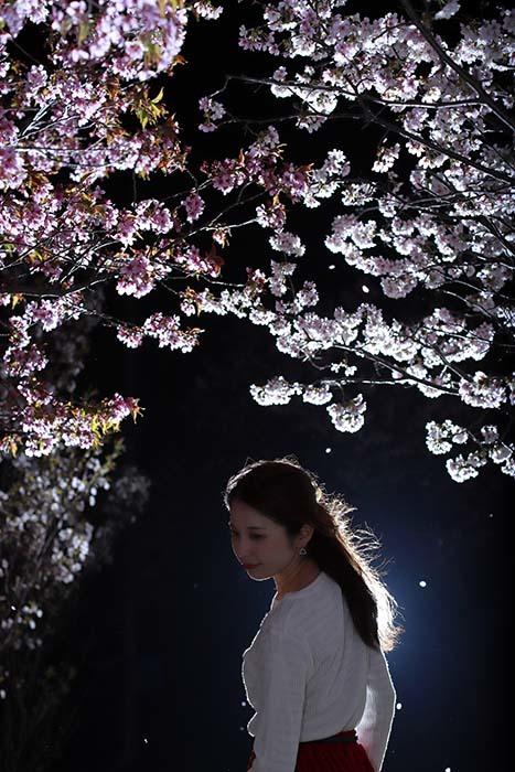 智美:夜桜2