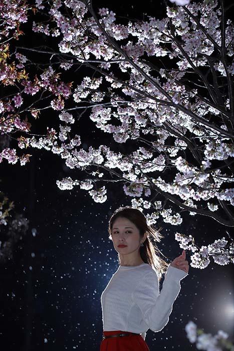 智美:夜桜3