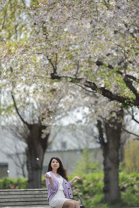 未来:桜散る