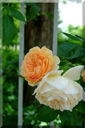 rosa&berry