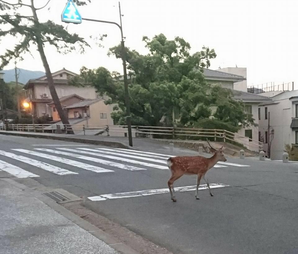 【奈良県泊】-6