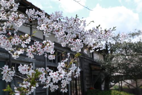 桜旅_2018_06