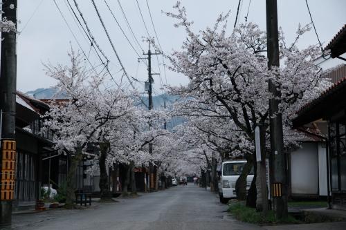 桜旅_2018_08