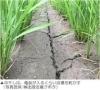 yuugaku180604.jpg