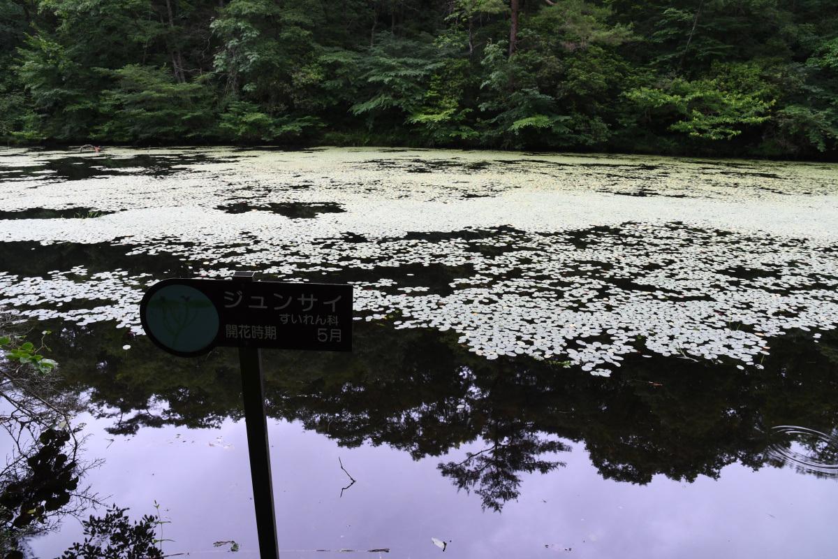 鯉が窪湿原