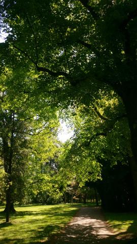 Hohenheim5月散歩1