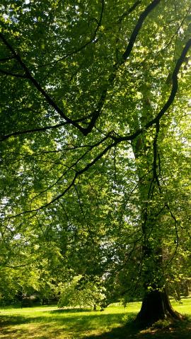 Hohenheim5月散歩2