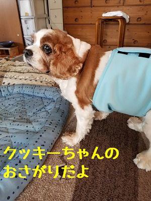ぽんちゃん12歳 (5)