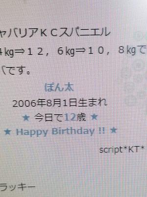 ぽんちゃん12歳 (9)
