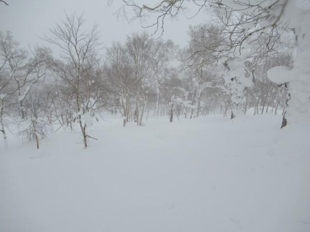 1月1日 程よいツリー