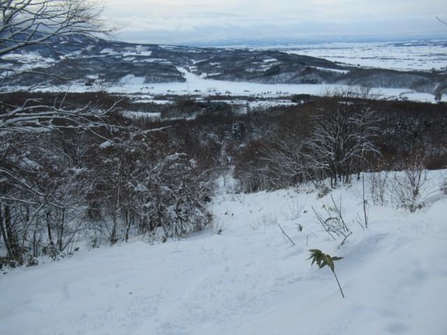 1月3日 林は全体的に濃い感じ