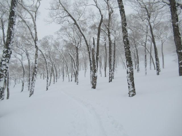 1月8日 程よい間隔の疎林