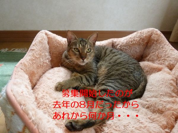 P1390599.jpg
